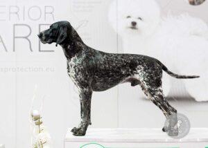 Šunų veislės: Kurtsharas