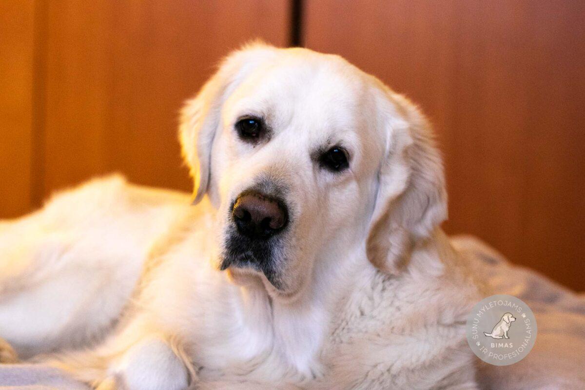 Šuns laikymas ir priežiūra